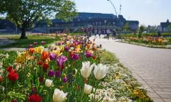 Schwabenlandhalle mit bunten Tulpen im Vordergrund