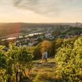 Meißen: Sonnenuntergang im Weinberg