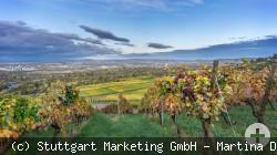 Weinlandschaft Fellbach