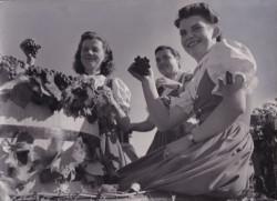 Weingärtnerinnen am Fellbacher Herbst 1949 © Stadtarchiv Fellbach